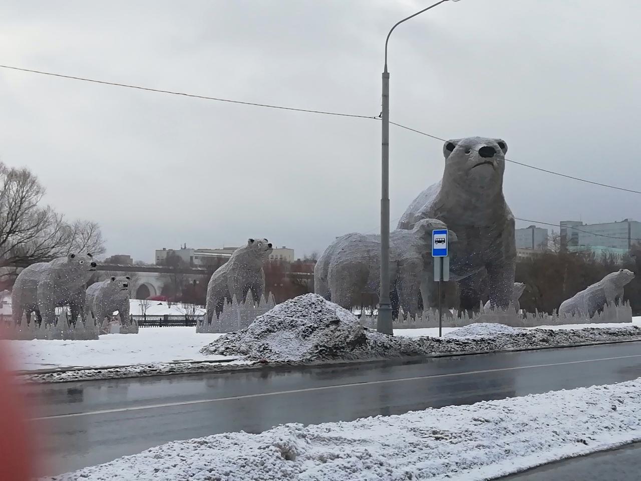 Отпустите нас домой! В Арктику!
