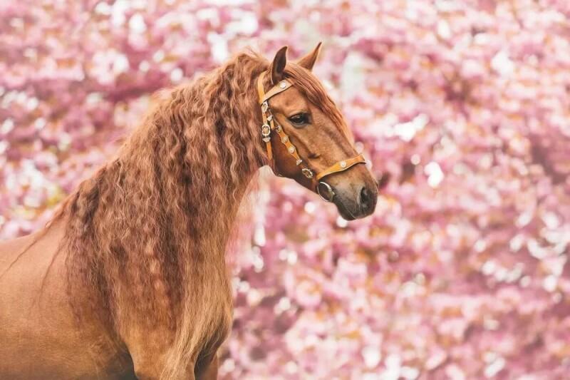 horse-143.jpg