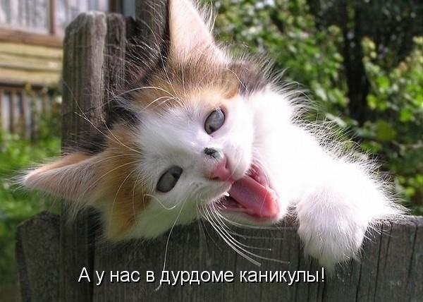 1396293088_mysli-vsluh-9.jpg