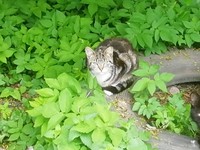 Питерский кошачий дворик M6.md.png
